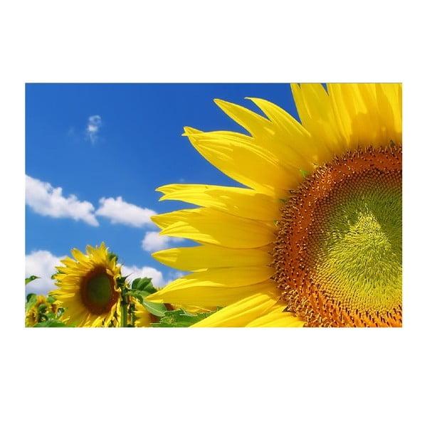 Obraz Słonecznik, 45x70 cm
