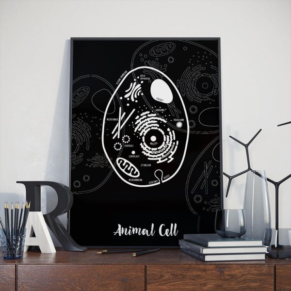 Plakat Follygraph Animal Cell, 30x40 cm
