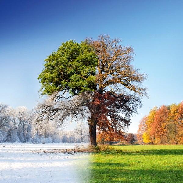 Szklany obraz 4 Seasons, 50x50 cm