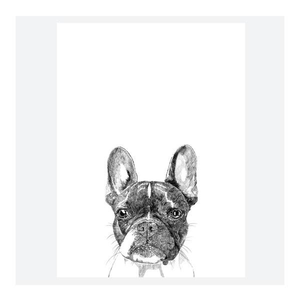 Plakat Murphy The Boston Terrier, 30x40 cm