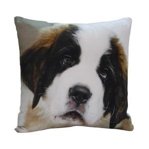 Poduszka Cute Puppy, 45x45 cm
