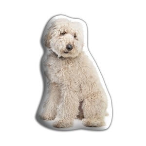 Poduszeczka Adorable Cushions Labradoodle