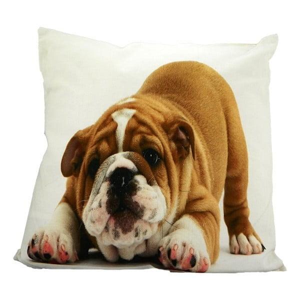 Poduszka Mars&More Bulldog, 50x50 cm
