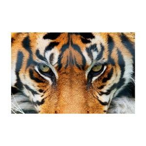 Plakat wielkoformatowy Tiger, 175x115 cm
