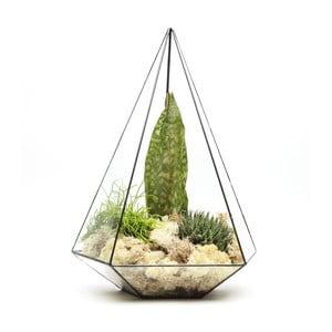 Terrarium z roślinami Super Aztec Jewel