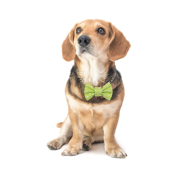 Mucha dla psa Funky Dog Bow Ties, roz. M, jasnozielona w kropki