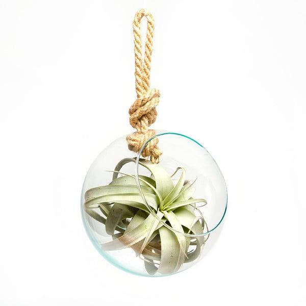 Wiszące terrarium z roślinami Xerographica