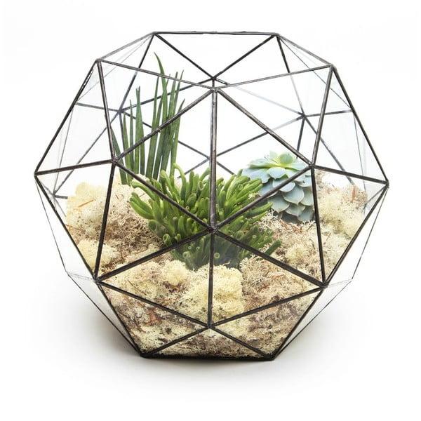 Terrarium z roślinami Super Aztec Hexagon
