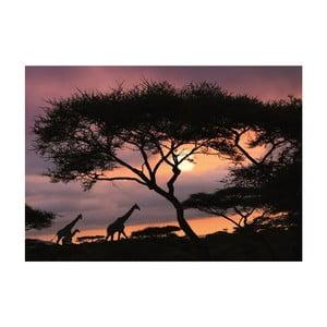 Fototapeta African Safari, 400x280 cm