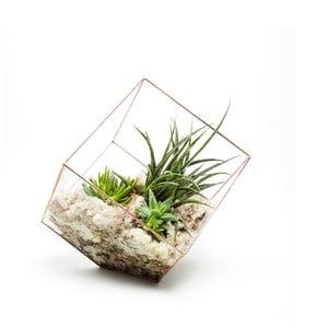 Terrarium z roślinami Supersize Cube, w jasnej ramce