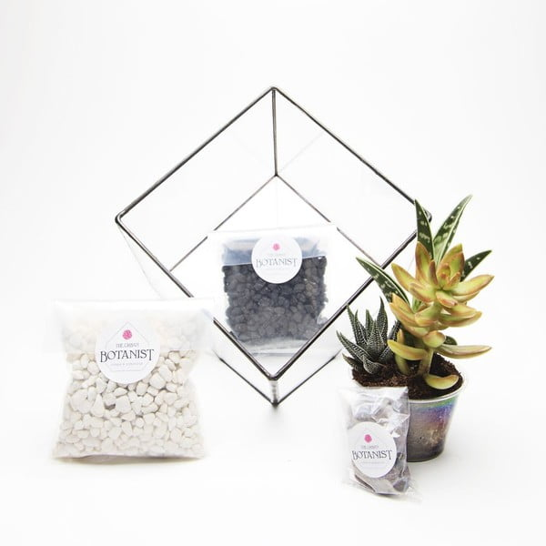 Terrarium z roślinami Aztec Cube DIY