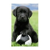 Fotoobraz Football Puppy, 51x81 cm