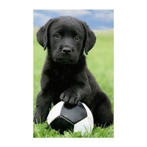 Fotoobraz Football Puppy, 51x81 cm