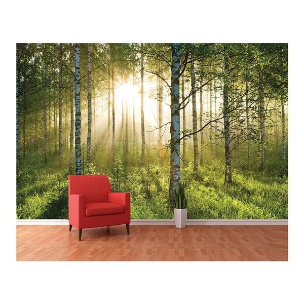 Tapeta wielkoformatowa Prześwitujący las, 360x253 cm