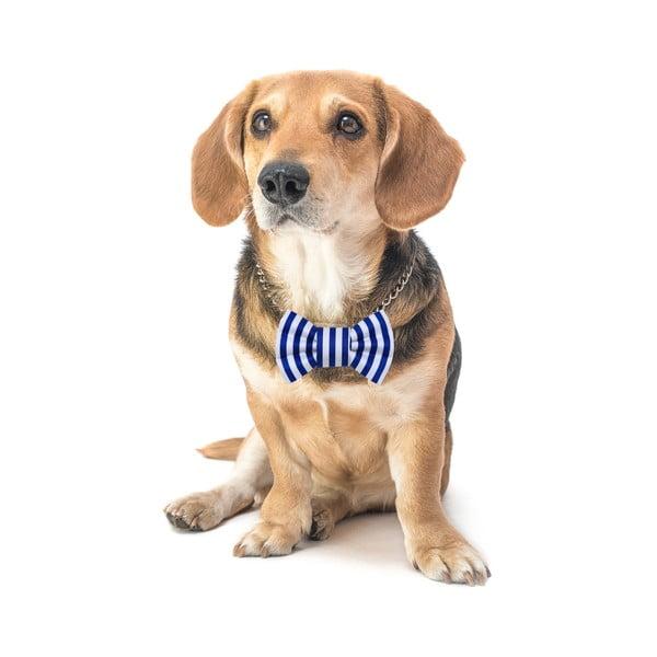 Mucha dla psa Funky Dog Bow Ties, roz. S, w niebieskie pasy