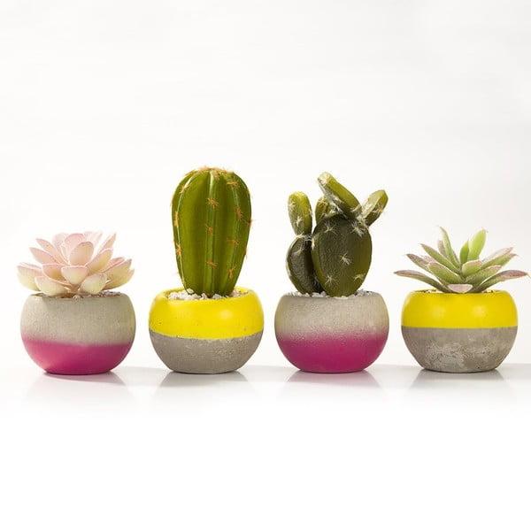 Zestaw 8 doniczek z kaktusami Mixed