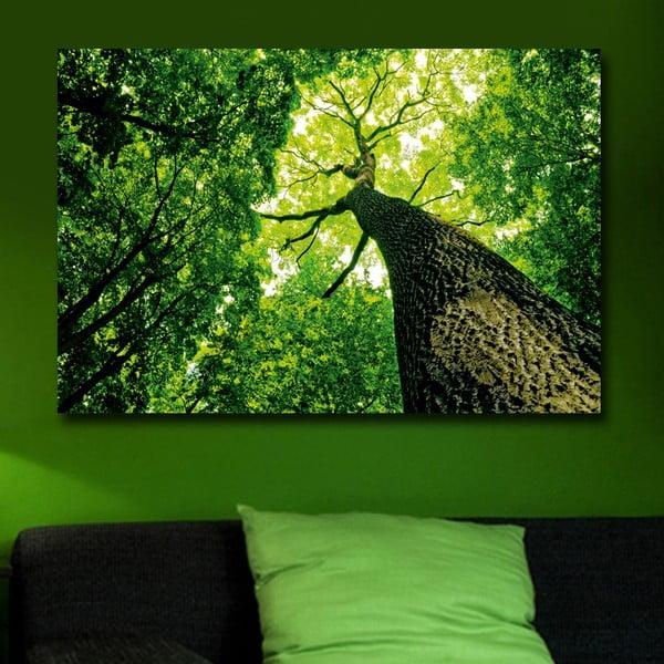 Obraz Zieleń, 45x70 cm