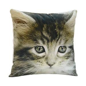 Poduszka Little Cat, 45x45 cm
