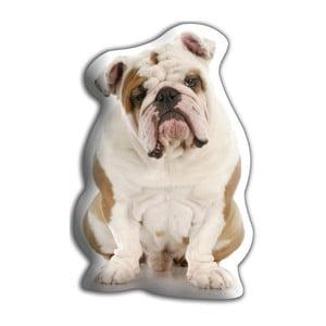 Poduszeczka Adorable Cushions Buldog