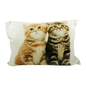 Poduszka Two Kittens British Shorthair 50x35 cm