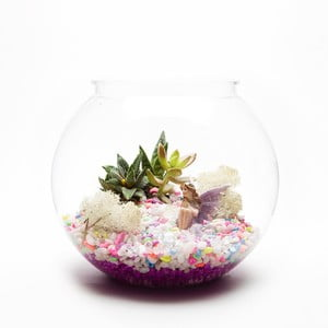 Okrągłe Terrarium z roślinami Garden