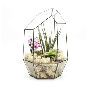 Terrarium z roślinami Super Aztec Gem
