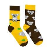 Skarpetki bawełniane Hesty Socks Koala, rozm. 39-42