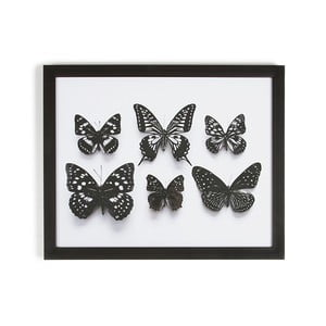 Obraz w ramie Graham & Brown Botanical Butterfly, 50x40 cm