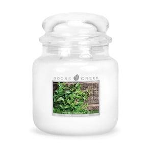 Świeczka zapachowa w szklanym pojemniku Goose Creek Eukaliptus, 0,45 kg