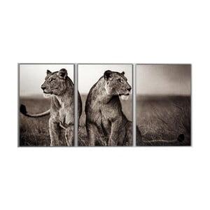 Trzyczęściowy obraz Lions, 45x90 cm