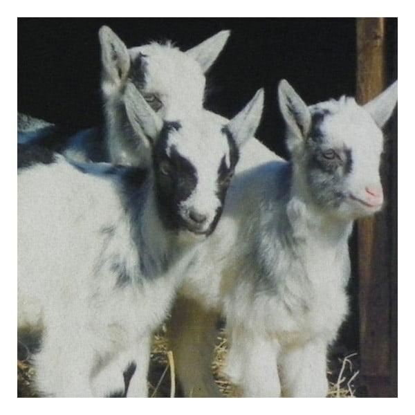 Dywanik Dwarf Goats 75x50 cm