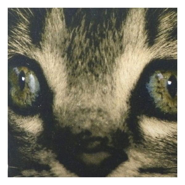 Poduszka Kitten Green Eyes 50x35 cm