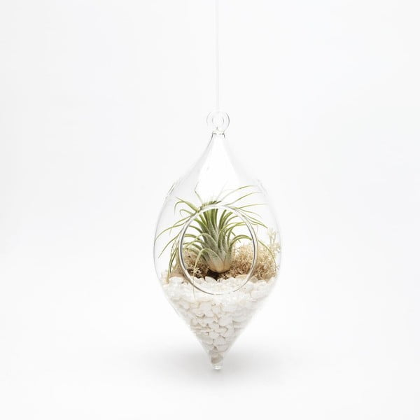Terrarium z roślinami Icicle