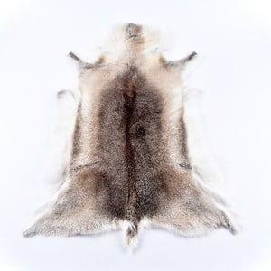 Skóra renifera Reindeer, 100x60 cm