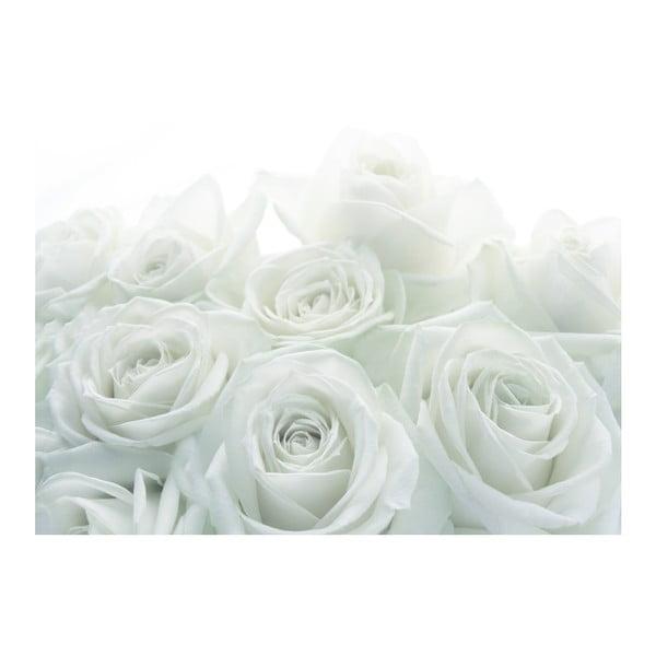 Fototapeta Biała róża, 400x280 cm