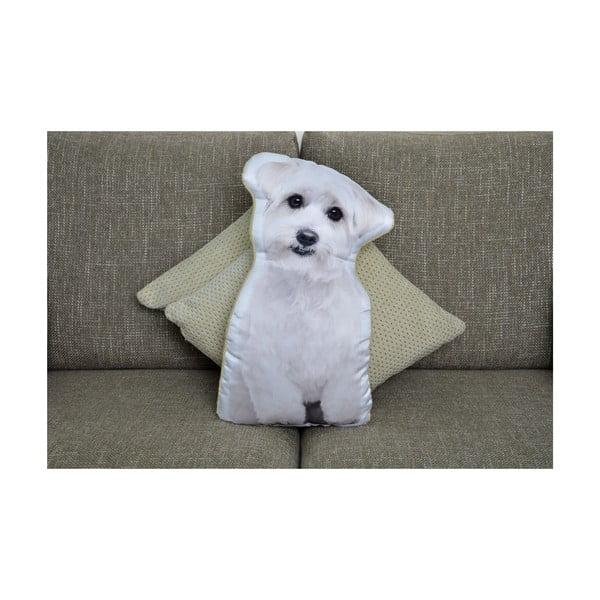 Poduszeczka Adorable Cushions Maltańczyk