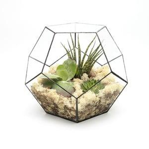 Terrarium z roślinami Super Aztec Penta