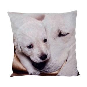 Poduszka Animals Dog, 42x42 cm