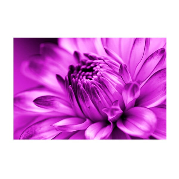 Obraz na szkle Fioletowy kwiat, 40x60 cm