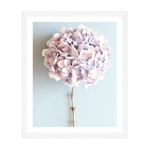 Obraz Global Art Production Mauve Hydrangea, 50x60 cm