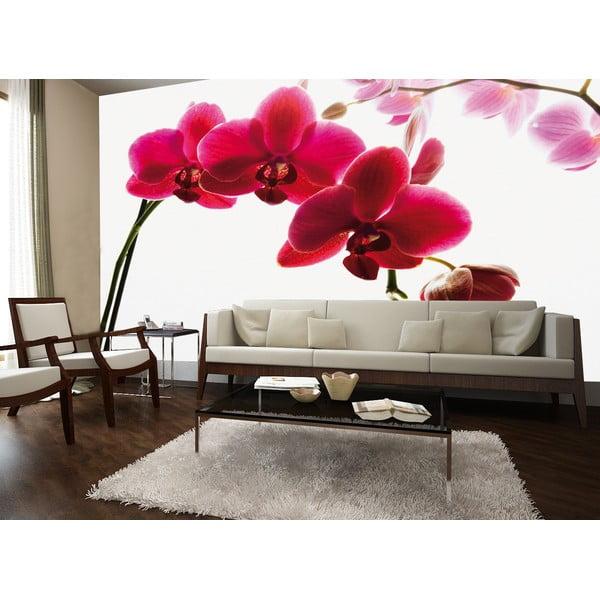 Tapeta wielkoformatowa Orchidea, 315x232 cm