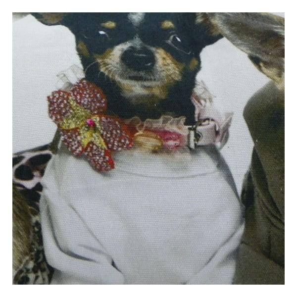 Poduszka Chihuahuas 35x50 cm