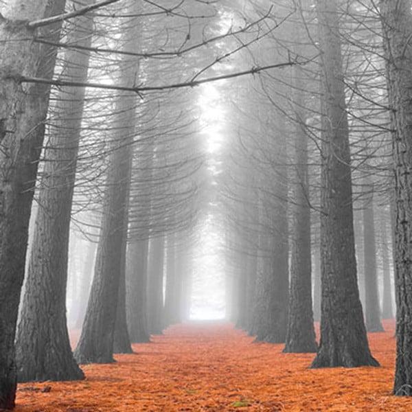 Obraz na szkle Zamglony las, 70x70 cm