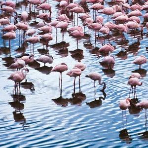 Szklany obraz Pretty Flamingo 50x50 cm