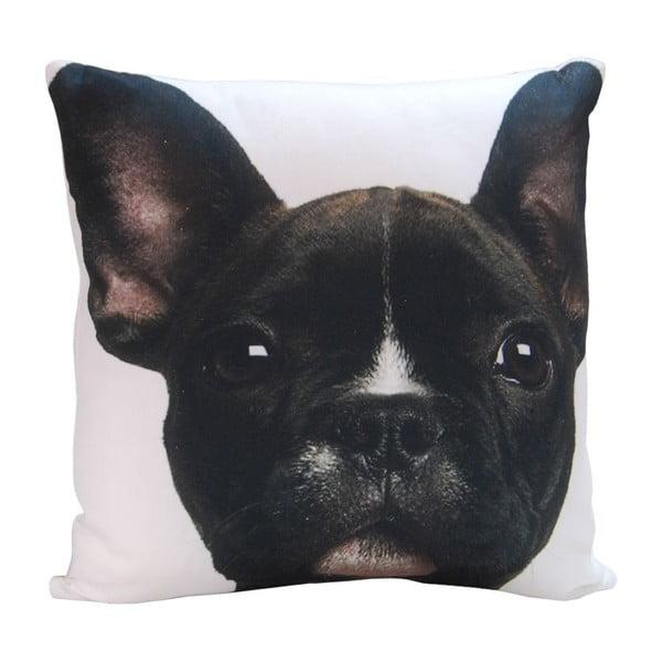 Poduszka Black Puppy, 45x45 cm