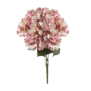 Różowy kwiat dekoracyjny Heaven Sends Hydrangea
