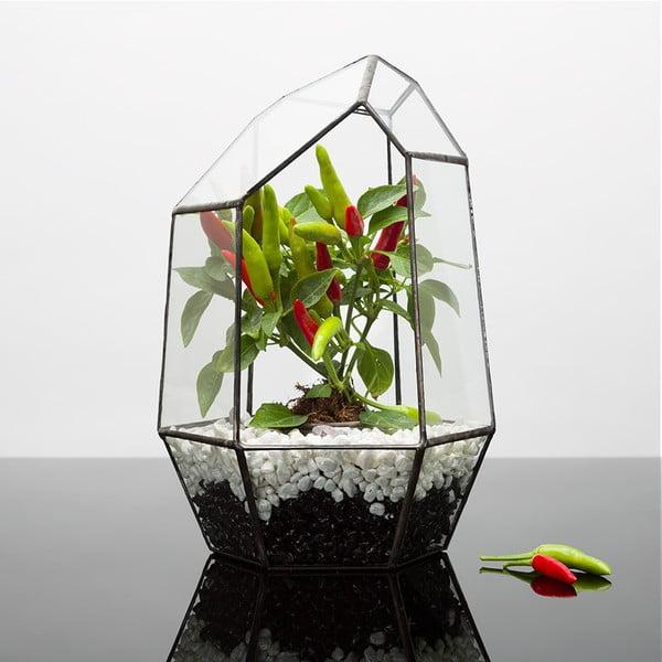 Terrarium z roślinami Chilli Aztec Gem, w ciemnej ramce