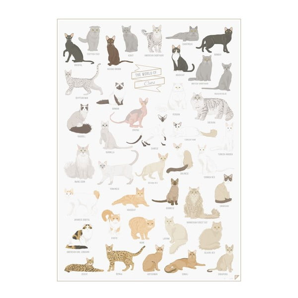 Plakat The World of Cats, A2