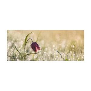 Obraz szklany DecoMalta Tulip, 125x50cm