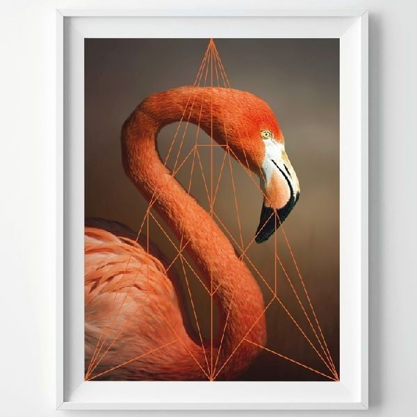 Plakat Flamingo Portrait, A3